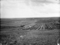 Titre original :  General view of Experimental Farm [Brandon, Manitoba].